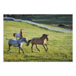 Horses in pasture near Polson, Montana Photograph