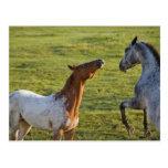 Horses in pasture near Polson, Montana Postcard