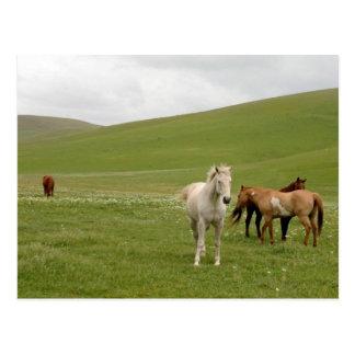 Horses in Pasture Postcard