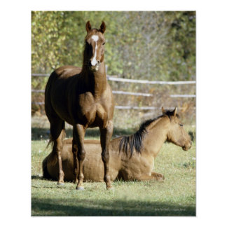 Horses in pasture posters