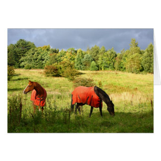 Horses in red coats card