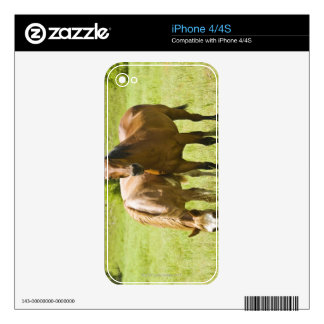 Horses in San Rafael Valley, Arizona Decals For The iPhone 4