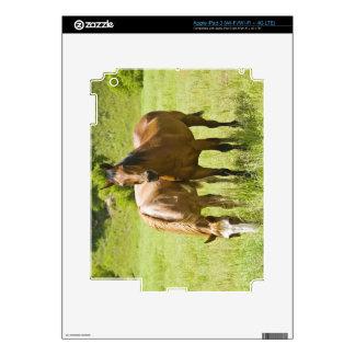 Horses in San Rafael Valley, Arizona iPad 3 Skins