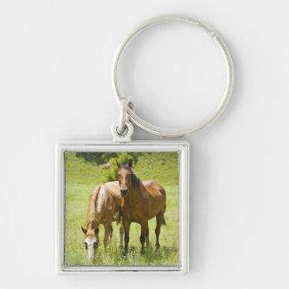 Horses in San Rafael Valley, Arizona Keychain