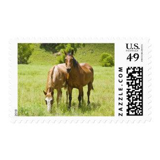 Horses in San Rafael Valley, Arizona Postage