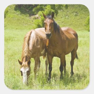 Horses in San Rafael Valley, Arizona Sticker