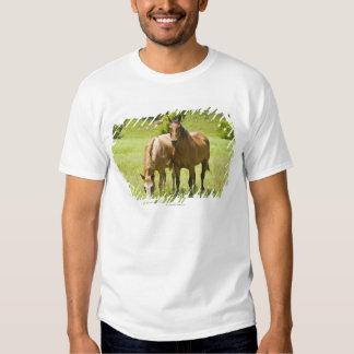 Horses in San Rafael Valley, Arizona Tshirts