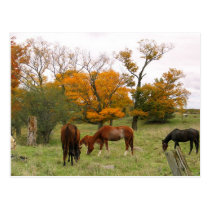 Horses In The Fall Postcard