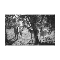 Horses in the Field Canvas Print