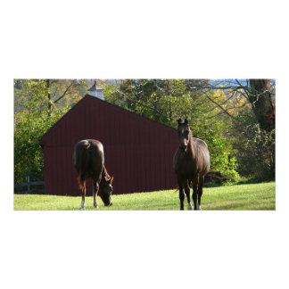 Horses in the field card