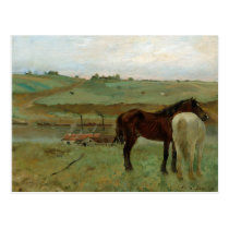 Horses in the Meadow by Edgar Degas Postcard