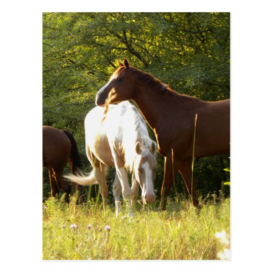 Horses in the Meadow Postcard
