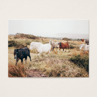 Horses in the Nature Business Card