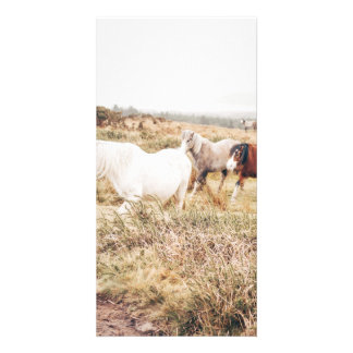 Horses in the Nature Card