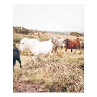 Horses in the Nature Flyer