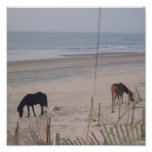 Horses in the Sand Print