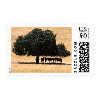 Horses In The Shade Postage