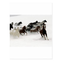 Horses in the snow postcard