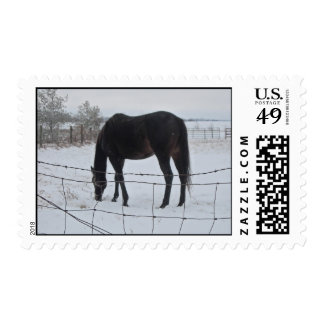 Horses in Winter Postage