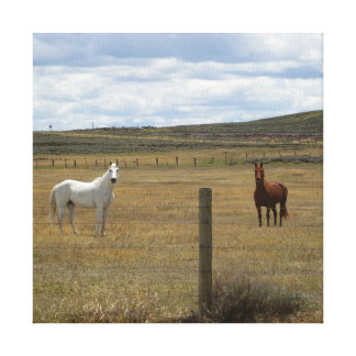 Horses in Wyoming Canvas