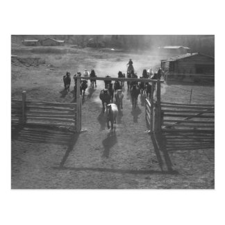 Horses into the corral postcard