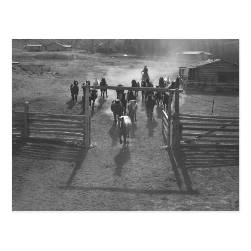 Horses into the corral post card