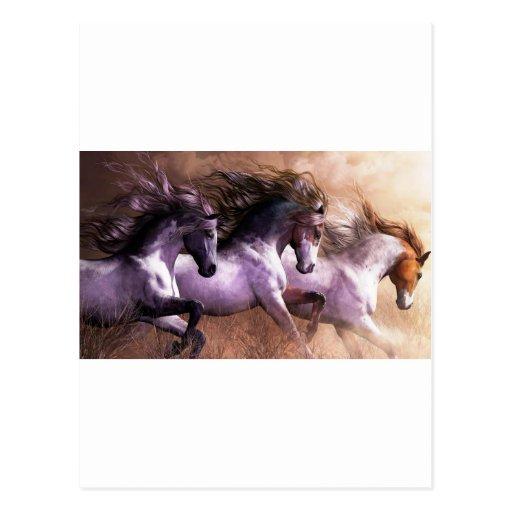 horses.jpg postcard