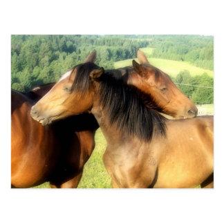 horses kiss postcard