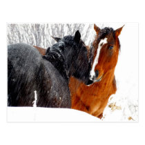 Horses Kissing in Snow Postcard