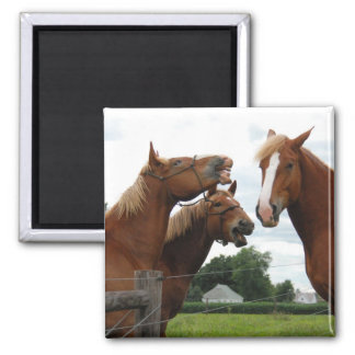 horses laughing 1 2 inch square magnet