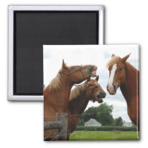 horses laughing 1 magnet
