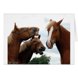 Horses laughing greeting cards