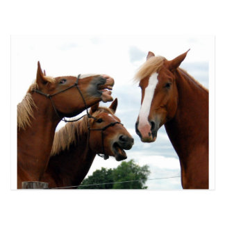 Horses laughing post card