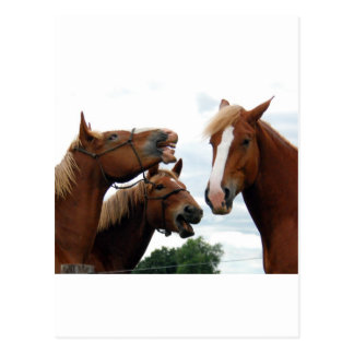 Horses laughing post cards