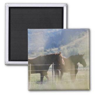 Horses 2 Inch Square Magnet