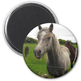 Horses Magnet
