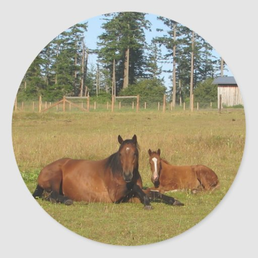 Horses: Mama and Baby Horse Lying Down Classic Round Sticker
