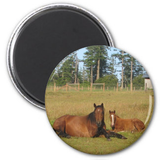 Horses: Mama and Baby Horse Lying Down 2 Inch Round Magnet