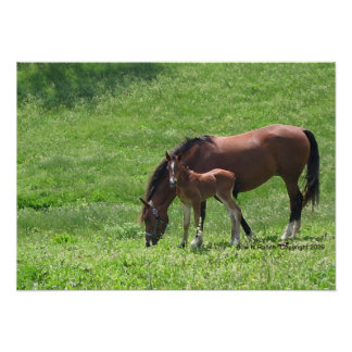Horses:  Mare and Foal Poster