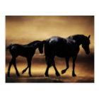 Horses mom and I Postcard