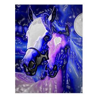 Horses & Night Post Card
