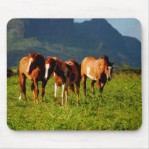 Horses of Kauai Mouse Pad