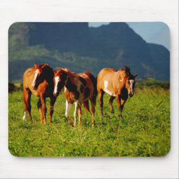 Horses of Kauai Mouse Pad