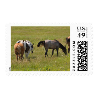 Horses of the West by Janz 6 Custom Postage