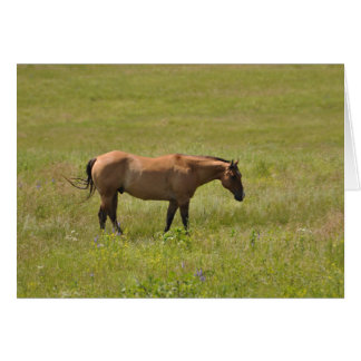 Horses of the West by Janz Print Number 2 Notecard