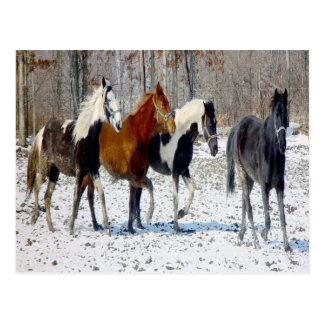 Horses on a Farm Postcard