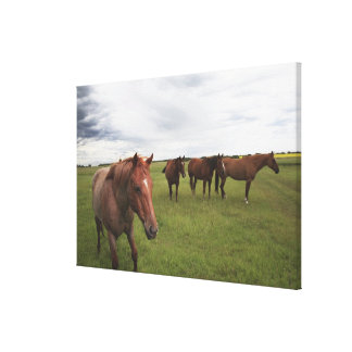 Horses On A Field Canvas Print