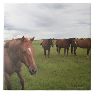 Horses On A Field Ceramic Tile