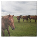 Horses On A Field Large Square Tile