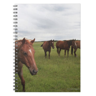 Horses On A Field Notebooks
